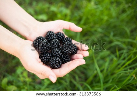 Closeup of female hands holding handful of blackberries on green grass background