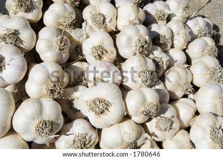 Closeup of fresh garlic bulbs
