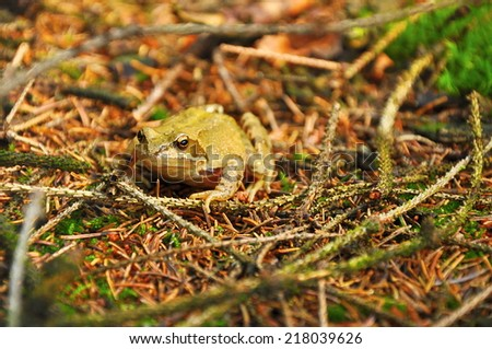 closeup of frog in forest - stock photo