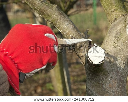 Closeup of gardener's hand protecting pruned apple tree branch with white wound paint - stock photo
