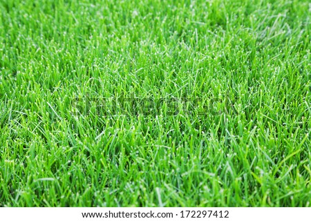 Closeup of green cut grass lawn background with selective focus - stock photo