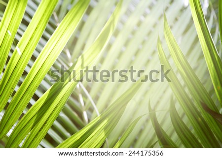 Closeup of green leaves - stock photo