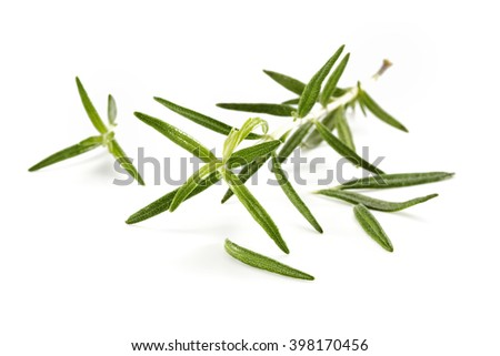 closeup of green leaves and white background  - stock photo