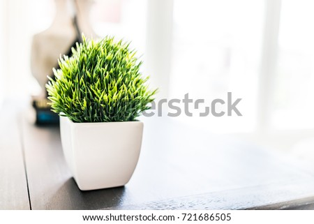Closeup Of Green Plant In Small White Ceramic Flowerpot On Table In  Minimalist Staged Model House