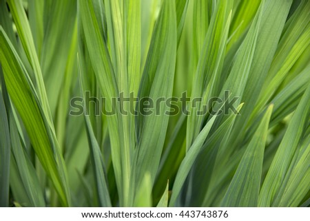 Closeup of green plant leaves, shallow focus - stock photo