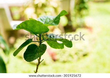 Closeup of green plants in the garden, on blurred background - stock photo