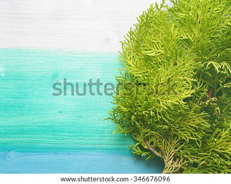Closeup of green thuja branch on green pastel and blue wooden background, copy space - stock photo