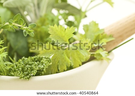 Closeup of herbs with cream pestle and mortar. Foreground shows parsley (curled and flat varieties), lemon thyme and dill.  Sage is visible in background.  Isolated on white.  Shallow depth of field. - stock photo