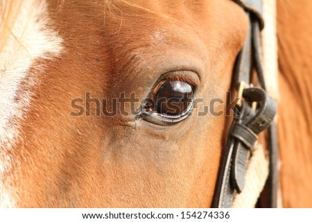 closeup of horse head with selective focus on the eye - stock photo