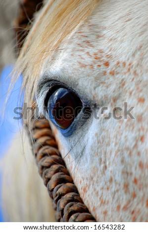 closeup of horses eye - stock photo