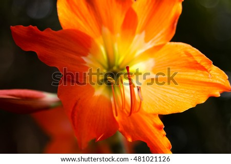 Closeup of illuminated orange flower.