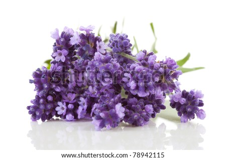 Closeup of lavender flowers over white background - stock photo