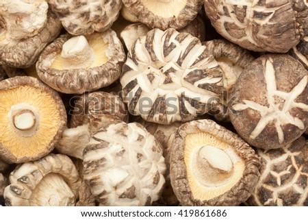 Closeup of lots of dried shitake mushrooms - stock photo
