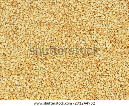 Closeup of lots of toasted sesame seeds. - stock photo