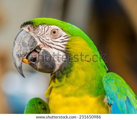 Closeup of Macaw - stock photo