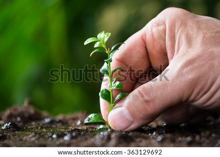 Closeup of man's hand planting small tree on ground - stock photo