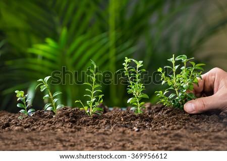 Closeup of man's hand planting tree on ground - stock photo