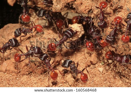 Closeup of multiple ants as they work to enlarge their ant hill