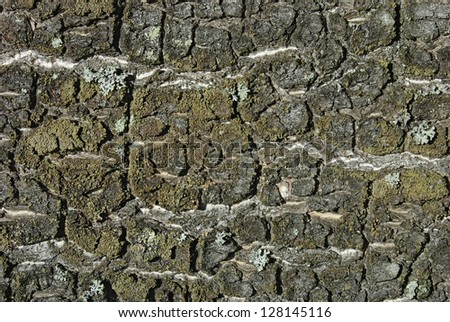 Closeup of old weathered cracked tree bark as background - stock photo