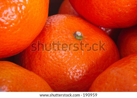 closeup of oranges