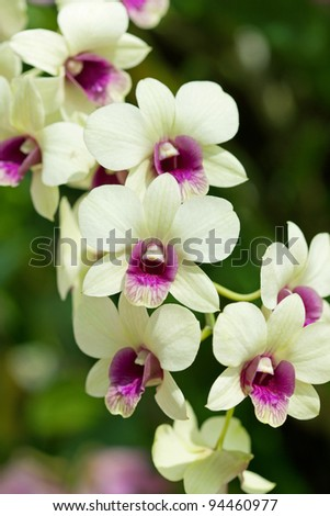 Closeup of orchids - stock photo