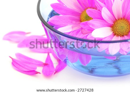 Closeup of pink flower blossoms floating in water