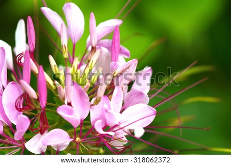 closeup of pink flowers on green background