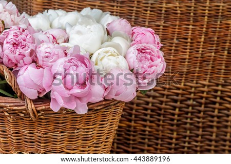 Closeup of pink peony flowers in basket - stock photo