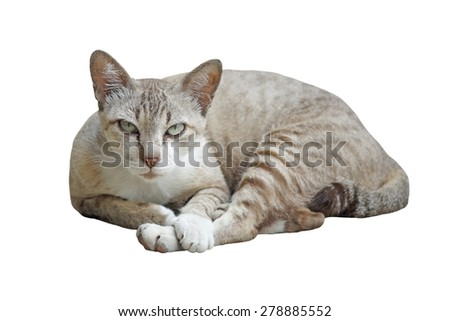 closeup of  pretty cat isolated on white background