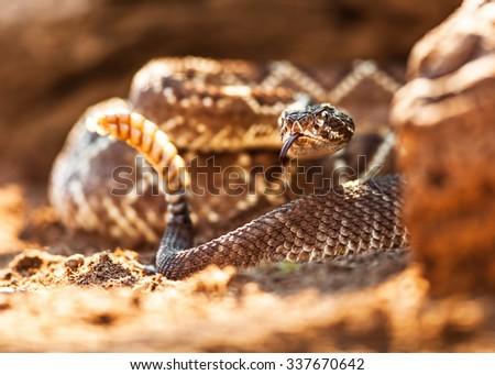 Closeup of rattlesnake on ground - stock photo