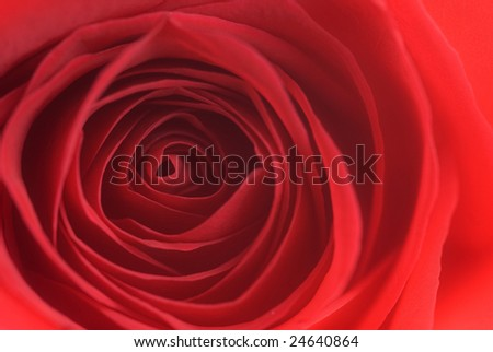 Closeup of red rose leaves spiral