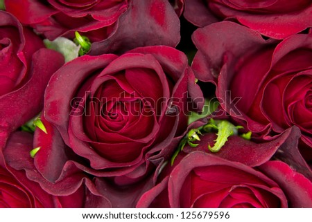 Closeup of roses - stock photo