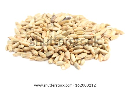Closeup of rye grain isolated on white background - stock photo