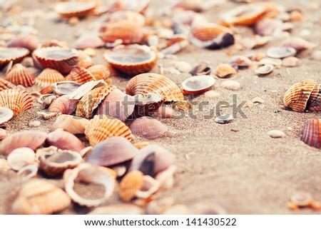 Closeup of seashells on the sand at the beach