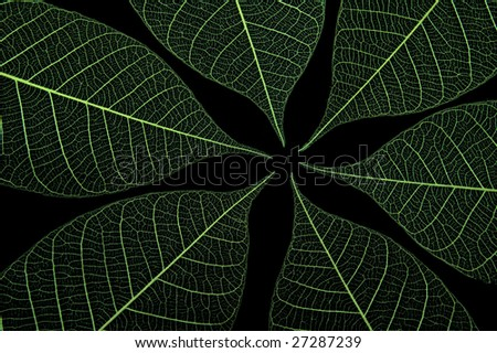 Closeup of several green leaves on black background