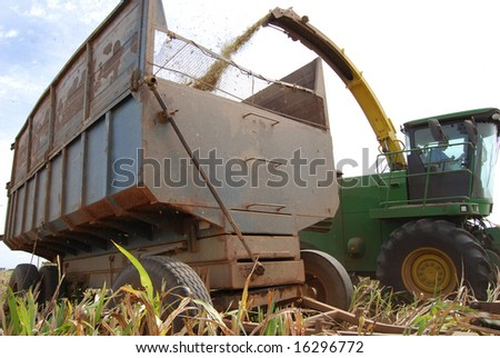 Closeup of sorghum harvested and transported in a rusty trailer on a cattle farm in Mato Grosso, Brazil