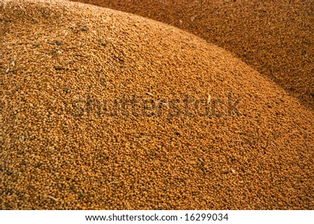 Closeup of soy beans in a storage pile - stock photo