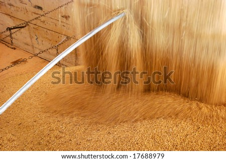 Closeup of soybean being poured from a storage warehouse into a truck - stock photo