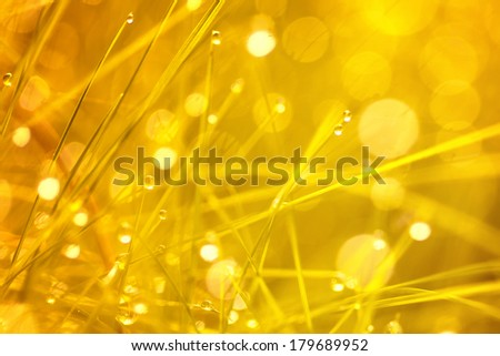Closeup of spiritual golden and blurry grass with water droplets. - stock photo