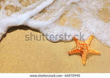 Closeup of starfish on beach - stock photo