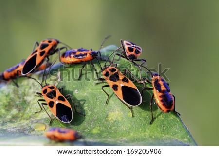 closeup of stinkbug in wild - stock photo