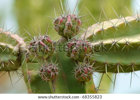 closeup of succulent plant with big spikes