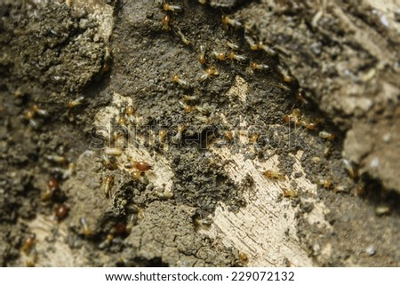 Closeup of termites colony inside a rotten old tree - stock photo