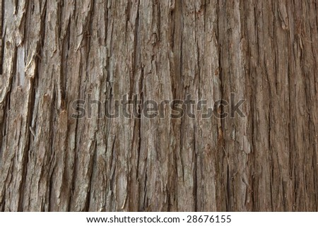 Closeup of the bark of a cedar tree - stock photo