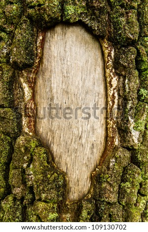 closeup of the bark of an old pine tree - stock photo