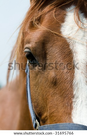 Closeup of the head of a horse