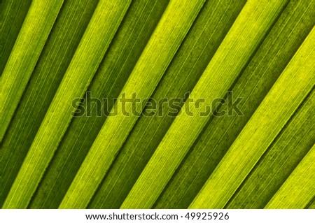 Closeup of the palm leaf - stock photo