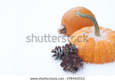 Closeup of Two Mini Pumpkins in Snow as seasons change from fall to winter.  Horizontal with room or space for copy, text.   - stock photo