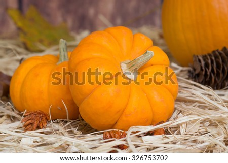 Closeup of two mini pumpkins on straw - stock photo