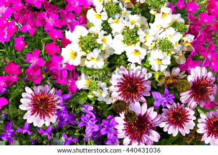 Closeup of vibrant blossoms of different colorful garden flowers.